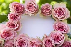 空白美丽的信函粉红色的玫瑰 免版税库存照片