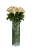 空白美丽的玫瑰 免版税图库摄影