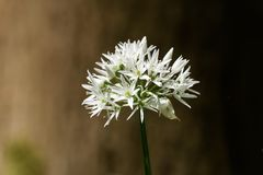 空白美丽的花 库存照片