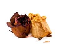 空白背景干燥的玫瑰 免版税库存图片