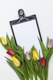 空白背景新鲜的范例文本的郁金香 免版税库存图片