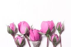 空白背景桃红色的玫瑰 免版税库存照片