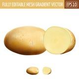 空白背景的土豆 也corel凹道例证向量 图库摄影