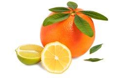 空白背景的柑橘水果 免版税库存照片