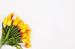 空白背景的郁金香 免版税图库摄影
