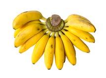 空白背景的香蕉 库存图片