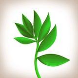空白背景绿色查出的叶子 免版税库存照片