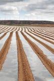 空白芦笋领域在Tudela, Navarra (西班牙) 库存图片