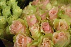 空白花束桃红色的玫瑰 图库摄影