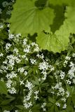 空白花的叶子 库存图片