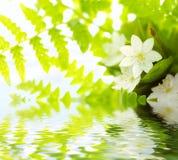 空白花绿色叶子的waterdrops 免版税库存照片