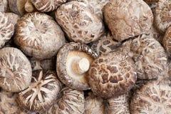 空白花ii日本的蘑菇 免版税图库摄影