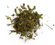 空白茶 免版税库存图片