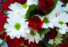 空白菊花红色的玫瑰 免版税图库摄影