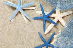 空白蓝色的海星 免版税库存图片