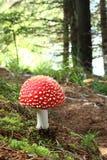 空白蘑菇红色的地点 免版税库存照片