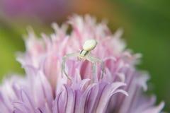 空白蜘蛛 库存照片