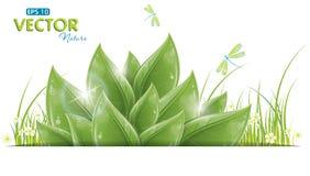 空白蜻蜓绿色查出的叶子 图库摄影