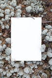 空白表格,填装的框架在文本 免版税库存照片