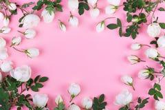 空白野生玫瑰 免版税库存图片