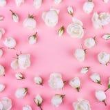 空白野生玫瑰 库存照片