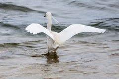 空白鸟 图库摄影