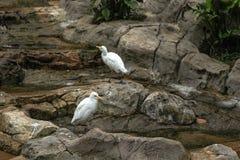 空白鸟 免版税图库摄影