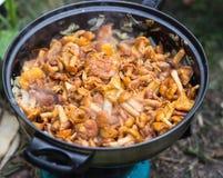 空白4黄蘑菇查出的蘑菇的片 免版税图库摄影