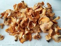 空白4黄蘑菇查出的蘑菇的片 库存图片