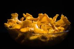 空白4黄蘑菇查出的蘑菇的片 图库摄影