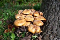 空白4黄蘑菇查出的蘑菇的片 免版税库存图片