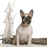 空白10个牛头犬法国前的月 库存图片