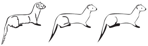 空白3黑色的白鼬 免版税图库摄影