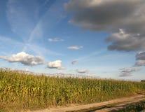 空的乡下路通过领域用麦子,天空 免版税库存照片