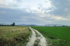 空的乡下路通过领域用麦子 阿塞拜疆大高加索 Sheki Oguz 库存图片