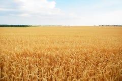 空的乡下路通过领域用麦子 免版税图库摄影