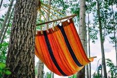 空的吊床在绿色森林没人在它休息 库存照片