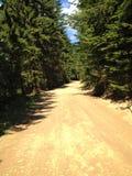 空的土蟾蜍在森林里 免版税图库摄影