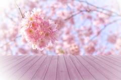 空的在被弄脏的,开花的树的透视红色木头有bokeh背景,产品显示蒙太奇的 免版税库存图片