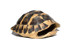 空的壳乌龟 免版税库存图片