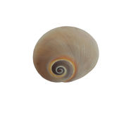 空的壳蜗牛 库存照片