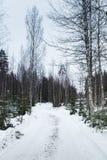 空的多雪的森林公路在冬天 免版税库存图片