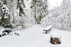 空的庭院冬天 免版税库存图片
