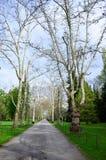 空的庭院 免版税图库摄影