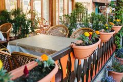 空的开放夏天咖啡馆和在罐旁边的木家具看法与藤椅的有植物和花的 库存图片
