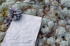 空的形式,被弄皱的纸碍手碍脚在森林 库存图片