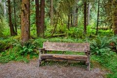 空的日志长凳在森林里 免版税库存图片
