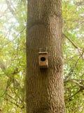 空的树木手工制造原始的鸟箱子 库存图片