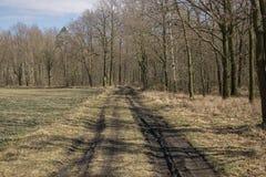 空的森林公路 图库摄影