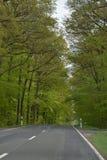 空的森林公路 库存图片